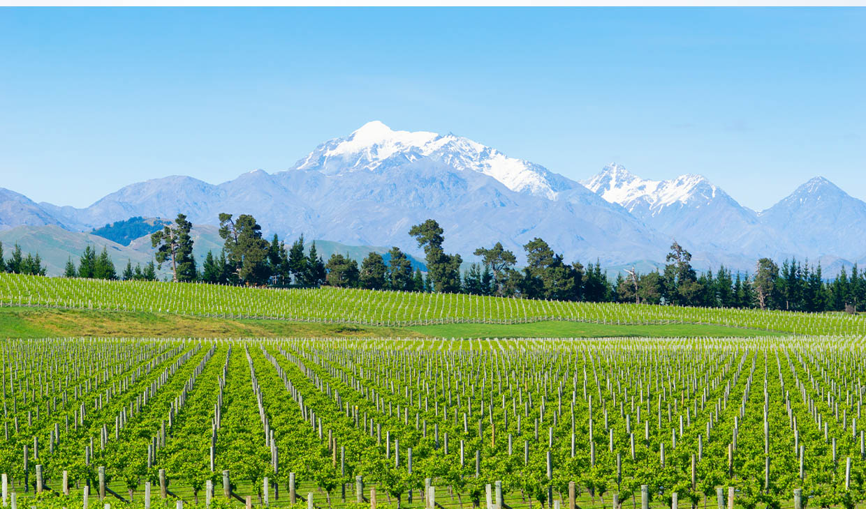 Wairau Valley - Sauvignon Blanc Single Vineyard Reserve